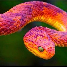 Colorful Snakes | Colorful snake | Animals
