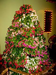 christmas tree made of christmas cactus
