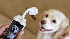 Paw Champs is raising funds for FLEXY PAW, Selfies & Portraits of your Dogs and Cats on Kickstarter! A simple phone attachment with a FLEXIBLE arm and PAW clip to attach your pets' favorite treat/toy to grab their full attention. Havanese Dogs, Pet Dogs, Dog Cat, Doggies, Pictures Of You, Cool Pictures, Selfies, Dog Gadgets, Perfect Selfie