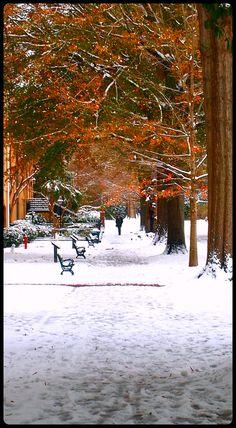 University of South Carolina - Columbia, SC - January 2011