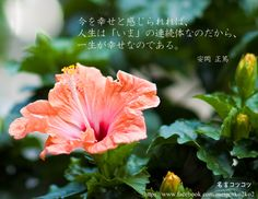 今を幸せと感じられれば、 人生は「いま」の連続体なのだから、 一生が幸せなのである。 安岡 正篤