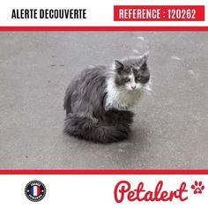 05.03.2018 / Chat / MontreuilSeine-Saint-Denis / France