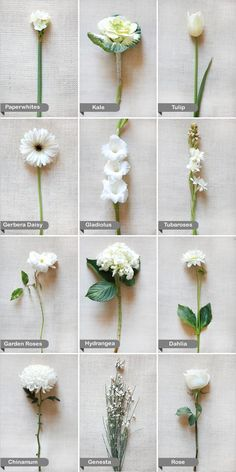 Essential white wedding flower guide names types pics white wedding flower guide from the wedding chicks i love these flower displays for when as an artist someone asks for a flower i dont know or a color mightylinksfo