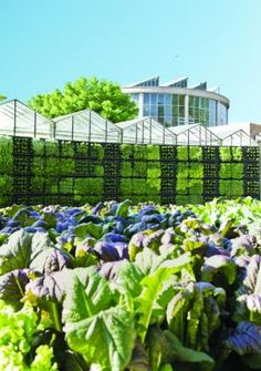 Responding to its constituents' obsession with local and sustainable food, the Atlanta Botanical Garden transformed a former parking lot into an edible garden with cutting edge style.  Can you dig it? Paradise UNPAVED!