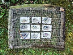 mano kellner,  drawing challenge: nest