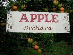 From The Apple Orchard Old Orchard, Apple Orchard, Apple Tree, Red Apple, Apple Farm, Cider House, Apple Valley, Apple Harvest, Apple Crisp
