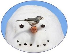 Seasonal Bird Feeding Tips - Winter  Bird feeding is a year-round activity. Birds don't all disappear in the winter. If you put out birdseed, you'll be amazed at how many birds do stay around for the winter. Your birdfeeders will be busy places especially after snowstorms when trees and other food sources are covered. Just be sure to remove any snow that blocks the seed at your feeders.