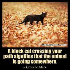 Crossing paths with a black cat means it is going somewhere....away is the direction.