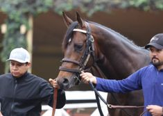 """San Diego Horse Race » Exaggerator """"Happy, Healthy and Fit"""" For Saturday's Kentucky Derby"""