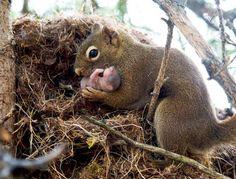 20 Теплых Фотографий О Семейных Ценностях В Мире Животных