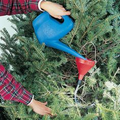 12 Handy Tips for Holiday Lights and Trees: Knee-Saving Watering Technique Christmas - Get the list: http://www.familyhandyman.com/smart-homeowner/ways-to-save-money/handy-tips-for-holiday-lights-and-trees?pmcode=pin110114g