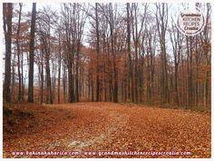 Autumn, jesen, forest