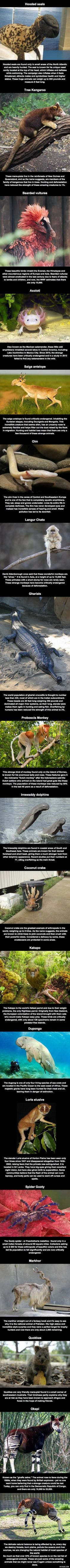 20 Animals You Probably Don't Know Exist, That Likely Will Be Extinct Before You Die - grabberwocky
