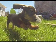 Watching These Puppies Run Through A Field Is All You've Ever Wanted | It will make your day