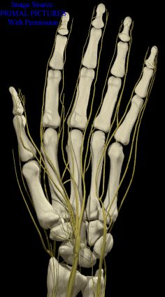Trivial yet fascinating true facts about the human hand. Hand Surgery, Hand Anatomy, Scientific Articles, Massage Benefits, Human Body Parts, Medical Information, Neurology, Anatomy And Physiology, True Facts