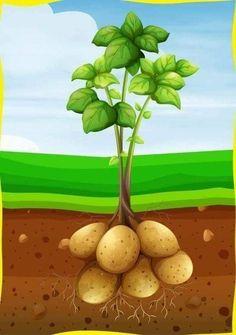 Fruit And Veg, Fruits And Vegetables, Vegetable Drawing, Veggie Art, Powerpoint Background Design, Garden Illustration, Black Wallpaper Iphone, Toddler Art, School Decorations