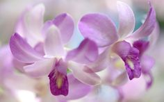Beautiful Facebook Cover Gallery | ... Download Wallpapers Facebook Cover Nature Flowers Beautiful Orchids