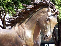 Stallions of Las Colinas