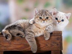 Fluffy Kittens | UPLOAD AN IMAGE + SEND US A LINK TO AN IMAGE + SEND US A LINK TO A ...
