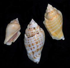 Snails high on acid make poor choices