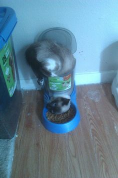 """Is this how to eat good?"" 