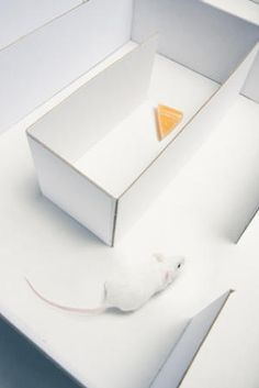 """""""Scientists Wrest Partial Control of a Memory"""""""