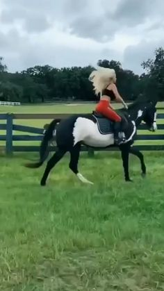 Cute Wild Animals, Cute Little Animals, Cute Funny Animals, Animals Beautiful, Funny Horse Videos, Funny Horses, Funny Animal Videos, Cute Baby Horses, Cute Baby Dogs