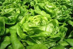 USDA Orders Periodic Testing Of Organic Food - Science News - redOrbit