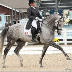Dressage. This horse is gorgeous, what an absolute dream look how perfectly he's built, he's so tall!!!! His conformation is perfect...he's so tall too!!! I need a tall horse that totally makes me feel like I'm actually sitting on something big and powerful, they usually all feel too small.