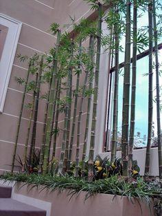 대나무 실내조경 - Google 검색