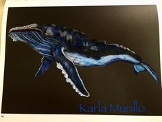 Humpback Whale By Karla M
