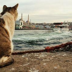 siiristanbul: Gemiler gidiyor, sen gidiyorsun Sulara yansıyor yeşil gözlerin Hüzün dalga dalga, ıssız ve derin Beni İstanbul'a terk ediyorsun … `Nurullah Genç
