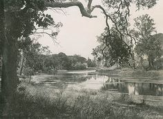 [Parramatta River in Parramatta Park (NSW)] Vacation Trips, Vacation Travel, Travel Advice, Travel Tips, Historical Images, Sydney Australia, Back In The Day, The Locals, Geography