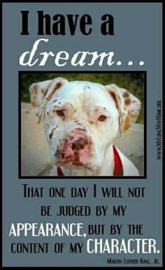 Those bastard humans suck. Better yet.chain them up & let THEM fight! Pitbulls are the SWEETEST dogs on Earth IF you raise them with LOVE. I Love Dogs, Puppy Love, Cute Dogs, Animal Quotes, Dog Quotes, Animal Pics, Tattoo Pitbull, Animals And Pets, Cute Animals
