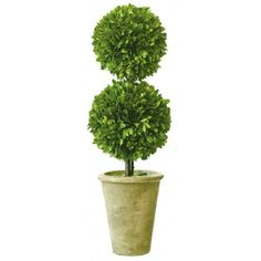 Preserved Boxwood Topiary image 6