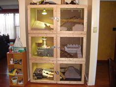 Multi-layered reptile habitat Gecko Habitat, Reptile Habitat, Reptile Room, Reptile Cage, Bearded Dragon Terrarium, Bearded Dragon Cage, Bearded Dragon Habitat, Lizard Cage, Snake Cages