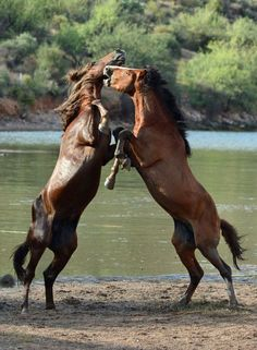 Wild Mustangs - Early morning playtime in Arizonia. -  Photo by Eddy Dinero - National Geographic Your Shot