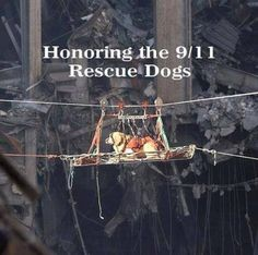 There were more than 300 working dogs dispatched to the 9/11 terrorist attacks at the World Trade Center. They served a variety of tasks including finding survivors, recovering the fallen and finding precious remembrances and artifacts of those lost. They also helped provide comfort. Their service was irreplaceable.