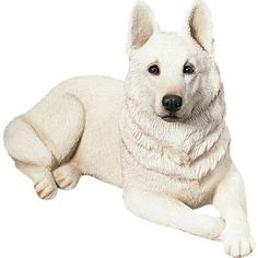 white german shepherds for sale - Google Search