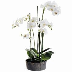 Faux Phalaenopsis Orchids with Clay Pot