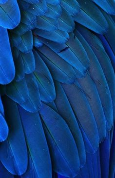 Macaw Feathers | Michaelfitzsimmons:Macaw Feathers V. Photo By Michael... | Inspiration