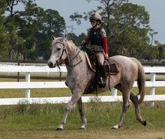 Dancers Forum: Thoroughbred, Horse; Indiantown, FL