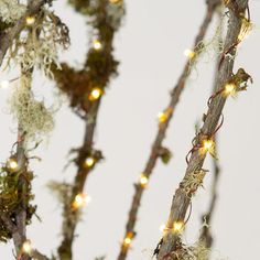 Stargazer Lights - $48.00»  Instead of green plastic (which is never the same color as a real tree), Terrain's Stargazer lights have copper wire, making the strand decoration in and of itself.