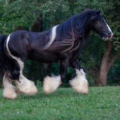 Gypsy Vanner Horses: 15 Breed Examples Out of Your Favorite Fairy Tale - Beautiful Horse Pictures, Beautiful Horses, Gypsy Horse, Gypsy Vanner Horses, Shire Horse, Animal Pictures, Animals Photos, Rare Animals, Equine Art
