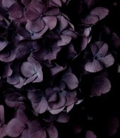 chasingrainbowsforever Colors ~ Aubergine Plum Colour b6aa4e457
