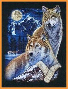 T-Shirt: Wolf Paar+Mond, Gr. 2XL, Western Biker Trucker Wölfe Husky Indianer USA   eBay