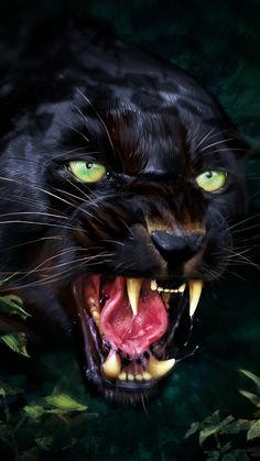 Animal Wallpaper for Android Mobile & iPhone Angry Animals, Animals And Pets, Cute Animals, Beautiful Cats, Animals Beautiful, Beautiful Pictures, Wild Animal Wallpaper, Jaguar Wallpaper, Mobile Wallpaper