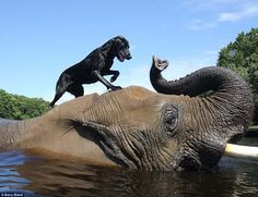 This elephant and dog have an incredibly touching bond. The two best friends are unforgettable.