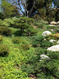 1000 Images About Hillside Planting On Pinterest