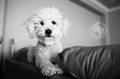 Cheeky couch dog -- www.mystaticguard.com #staticguard #cutedog #static
